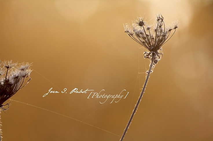 fall, autum, spider web, photography