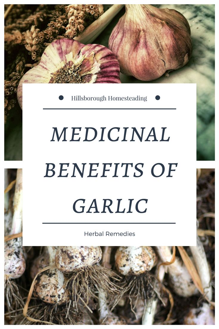 Chances are you're already familiar with one of the world's oldest medicines: garlic! Learn the medicinal benefits of garlic, plus easy recipes for every day use! | Hillsborough Homesteading