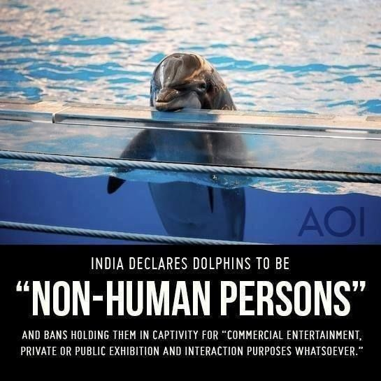 dolphins are people too.