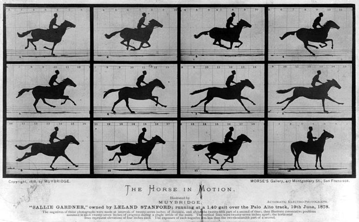 Horses really run like this...