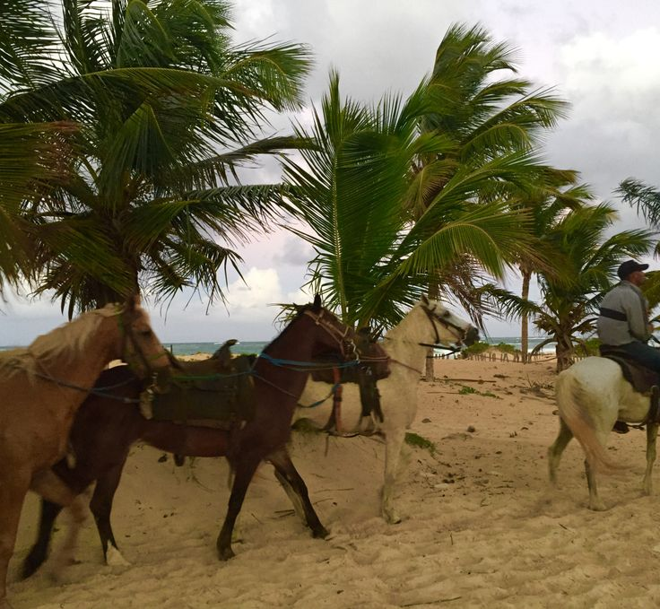 The Horses at the Hard Rock Hotel Punta Cana