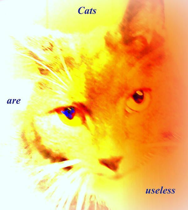 Cats are useless, read the book!  Buy it here:  https://www.createspace.com/4657365 or  http://www.amazon.com/dp/B00IAKSN8S