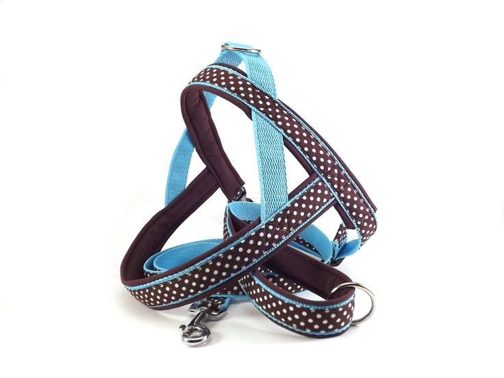Polka dot leash and harness. #colorfundogs
