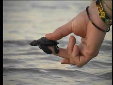 Maná - Selva Negra [Video]