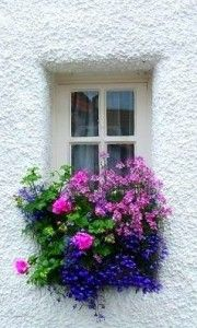 Beautiful window box! Flowers make such a difference