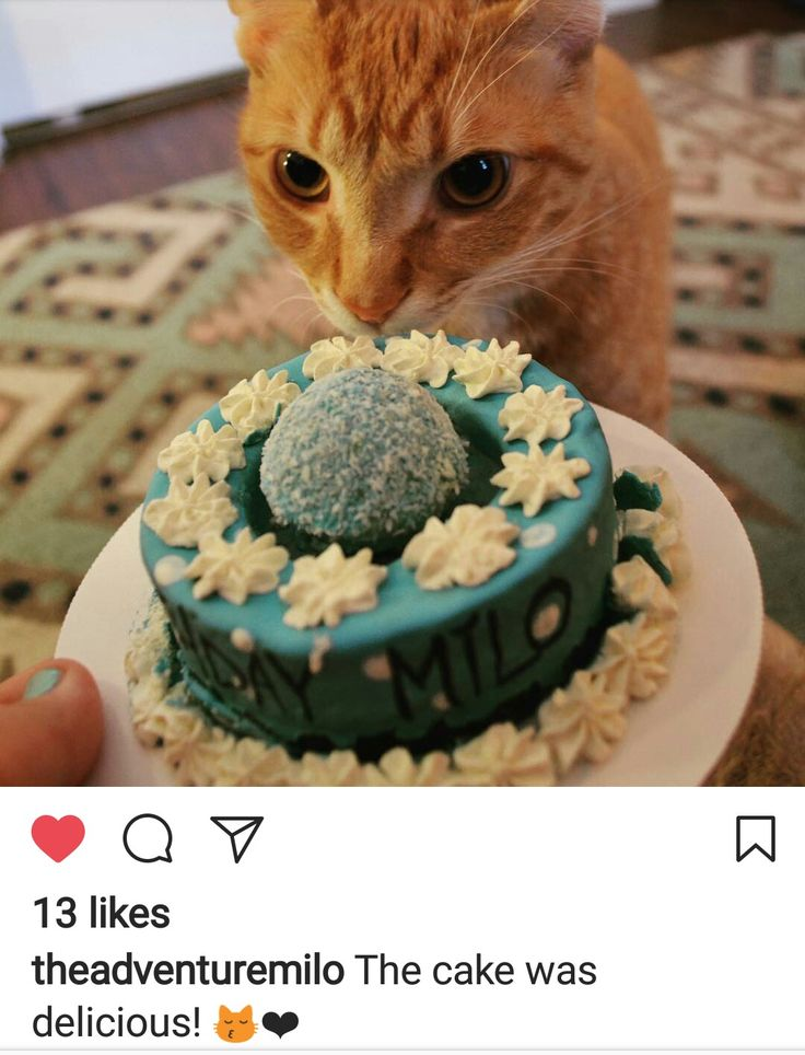 19 best Birthday Cake Treats For Cats images on Pinterest