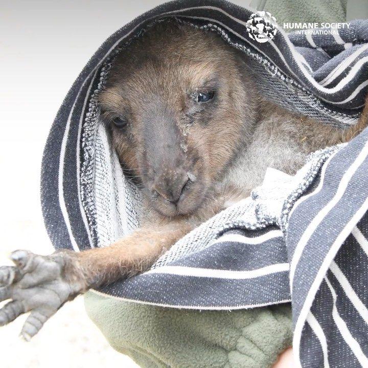 Humane Society International On Instagram Australia Fires Update We Ve Deployed More Of Our Disaster Respo In 2020 Kangaroo Island Disaster Response Humane Society
