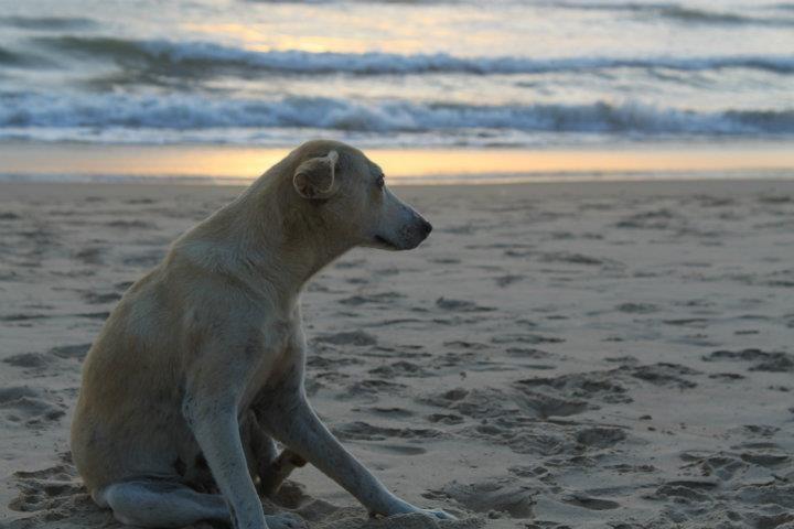 Kaun hu main !! (Tarkali Beach, Sep 2011)