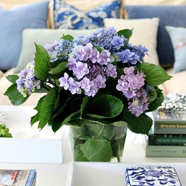 Monday hydrangeas, from last season. #happymonday