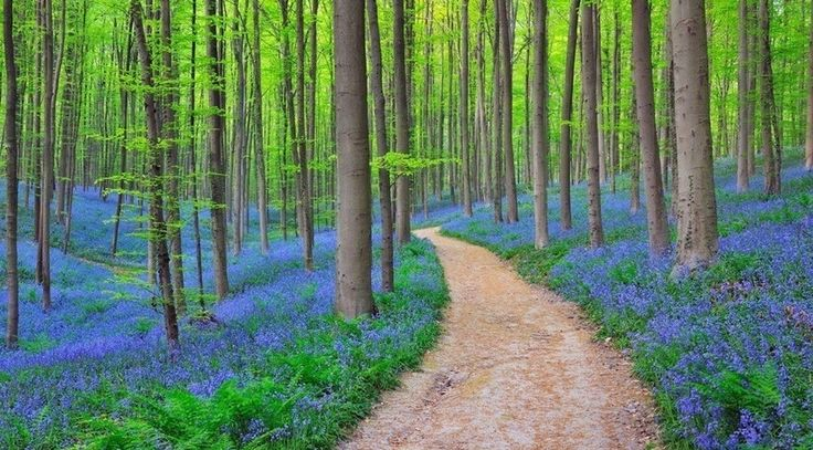 Halle's Forest, Belgium