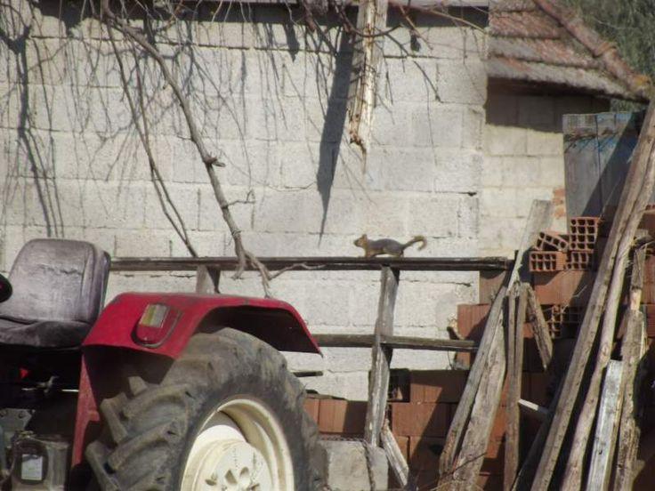 Köydeki sincaplar