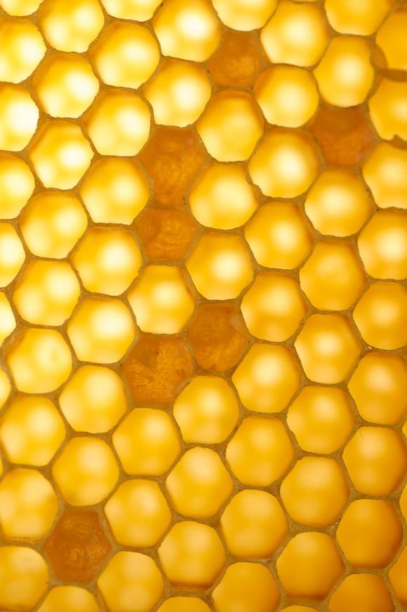Structuur--Honingraat--het is opgebouwd uit allemaal graten