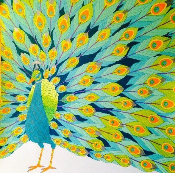 66 Best Millie Marotta Tropical World Images On Pinterest