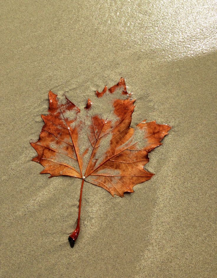 Leaf it in the sea