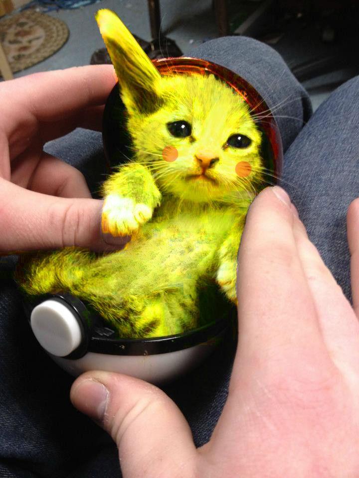 pikachu kitten Google Search Kittens Pinterest