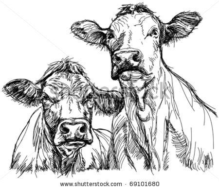 Google Image Result for http://image.shutterstock.com/display_pic_with_logo/73710/73710,1295206544,2/stock-vector-two-cows-black-and-white-sketch-69101680.jpg