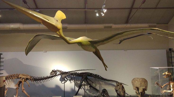 Los alumnos de primero y segundo de primaria han realizado una visita al Museo de Ciencias Naturales de Madrid...