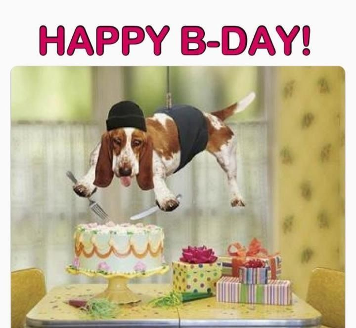 crazy dog | birthday | Pinterest | Crazy dog and Dogs