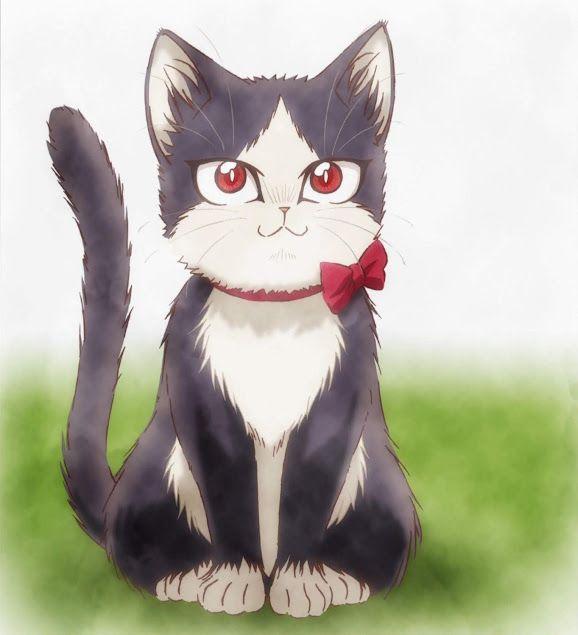 Аниме кота картинки