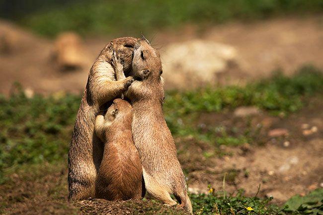15 забавных фото целующихся животных – Фитнес для мозга