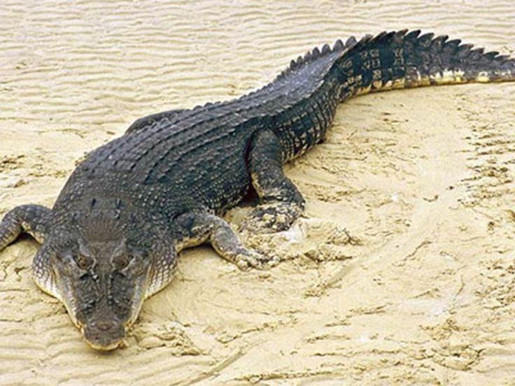 Tikarpada wildlife sanctuary - in Odisha, India