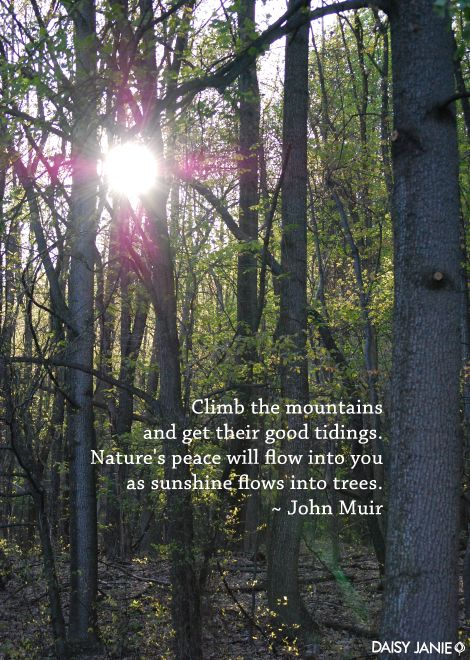 Climb the mountains and get their good tidings. Nature's peace will flow into you as sunshine flows into trees. - John Muir