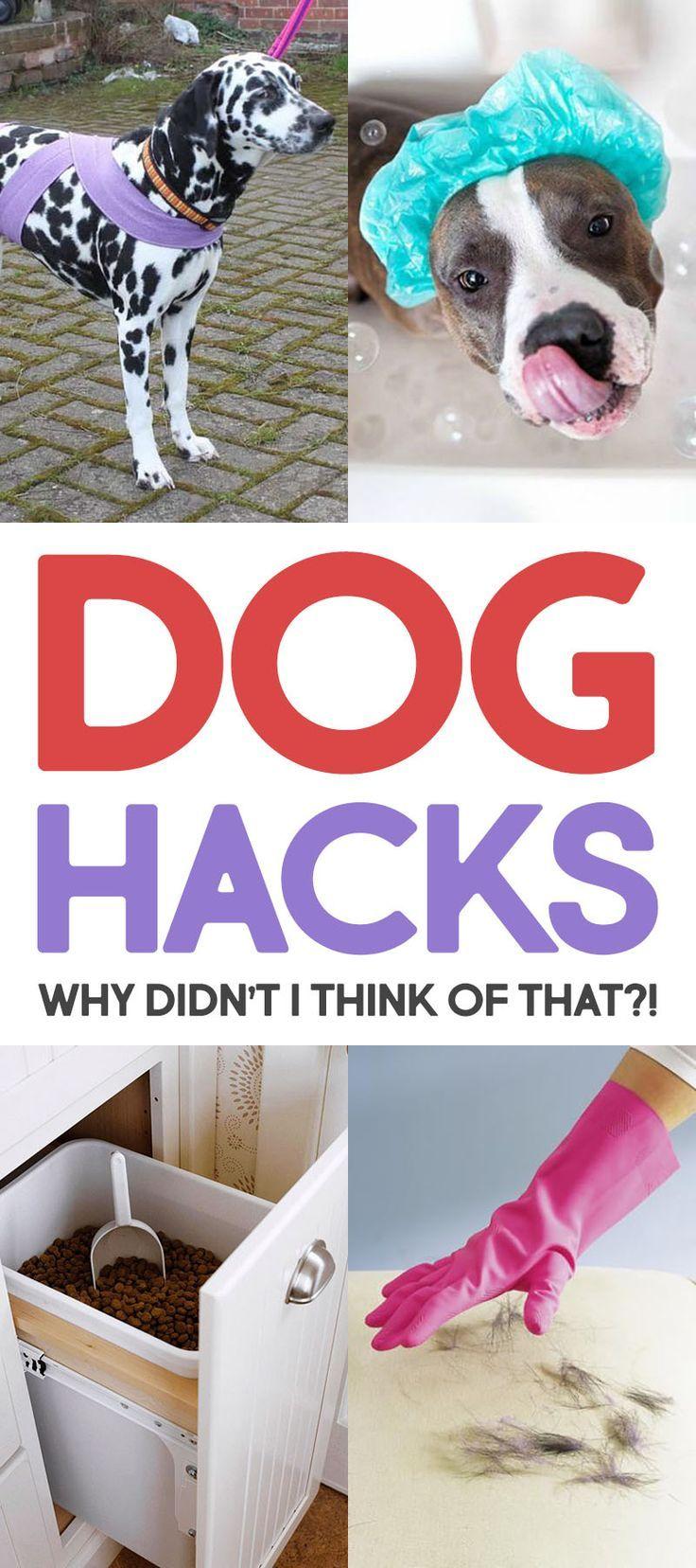 Dog Hacks Why Didn't I Think Of That Dog hacks, Dog