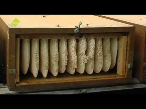 Vintage TIDE TV Die Bienenkiste YouTube