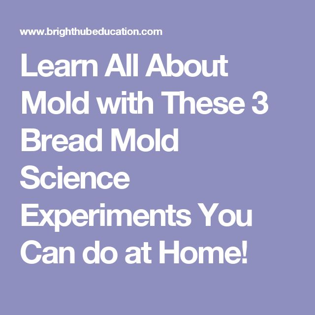 Learn All About Mold with These 3 Bread Mold Science Experiments You Can do at Home!