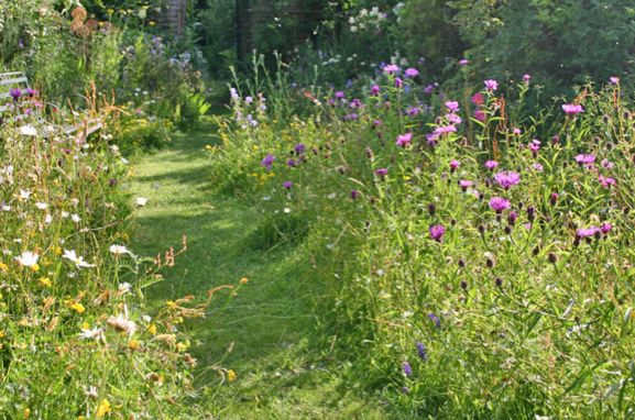 Path through wild flower meadow area of garden paths for Wild grass landscaping