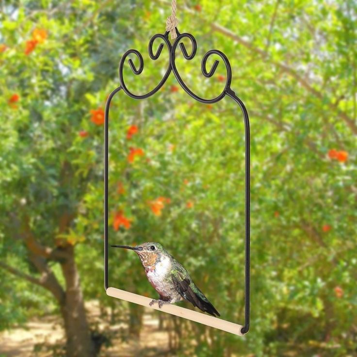 hummingbird perch, a place for these little birds to rest
