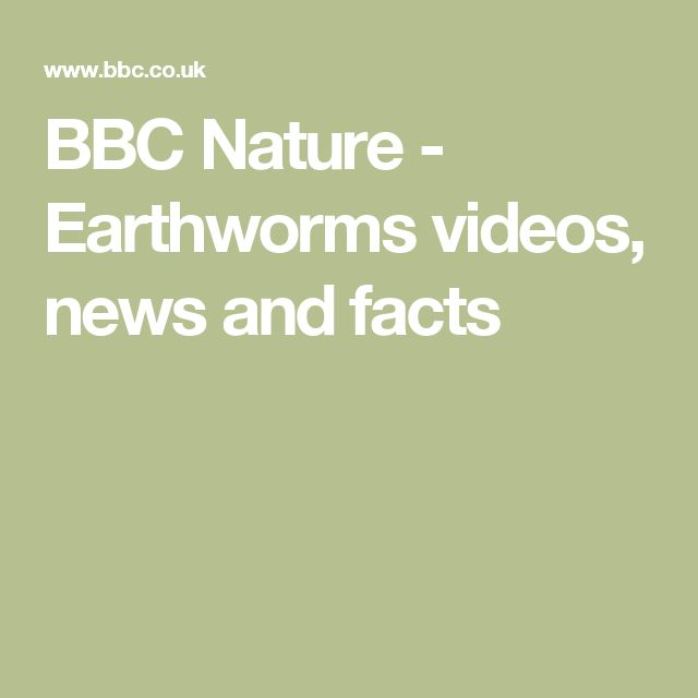 BBC Nature - Earthworms videos, news and facts