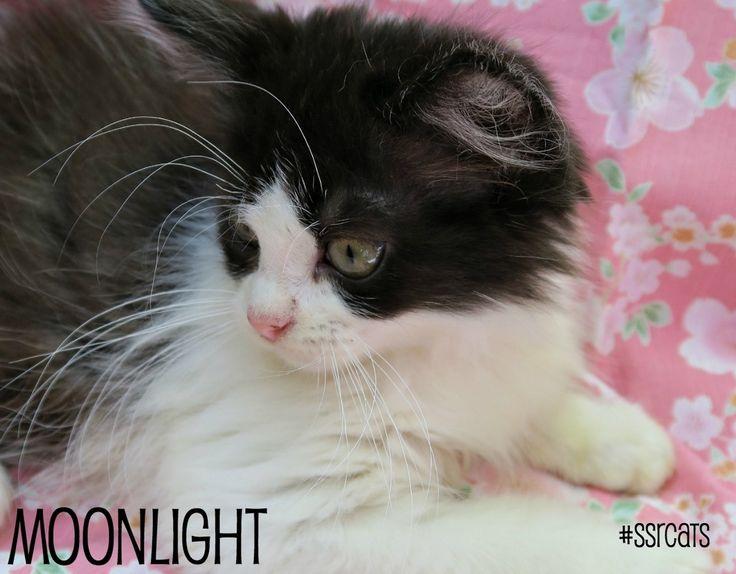 Moonlight :)