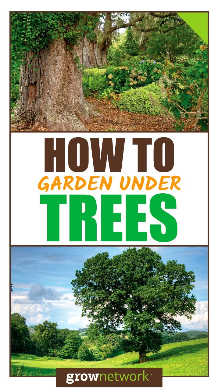 Can you garden under oak trees? Find out! | The Grow Network