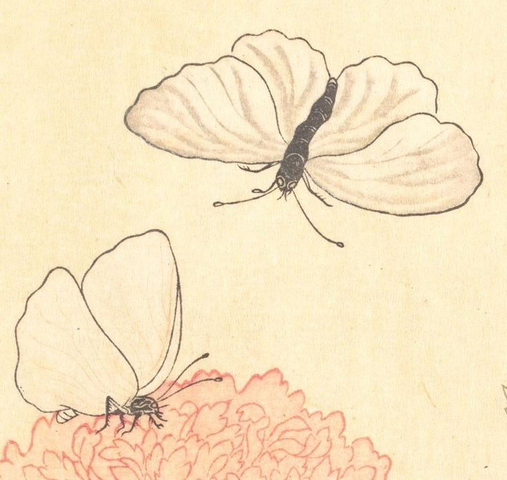 Butterfly (Chō); Dragonfly (Kagerō or Tonbo), from the Picture Book of Crawling Creatures (Ehon mushi erami), detail 4