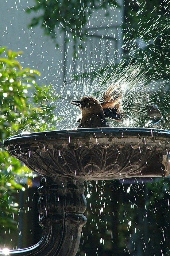 Auch Vögel lieben Pools :-)