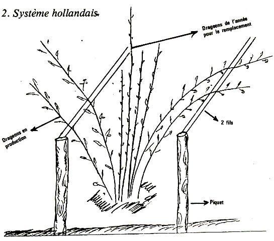 524 melhores imagens de jardin no pinterest - Comment planter des framboisiers ...