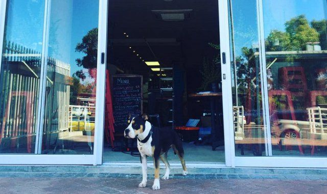 Maggie's Café Restaurant and Bar in Green Point Cape Town - dog friendly