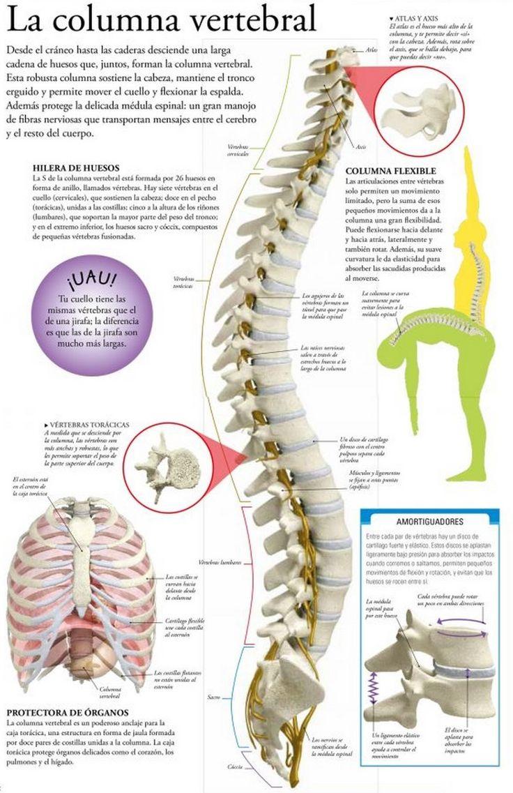 La profiláctica de la curvatura de la columna vertebral en sheynom el departamento