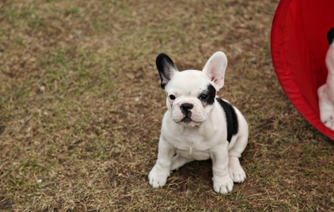 baby: Baby French Bulldog, Baby Heheh, Pigs Baby, Special Baby