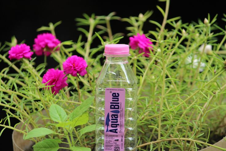 Aqua Blue Bottle Water and Mineral Water Bottle Wholesale Distributor | Aqua Blue, Mumbai