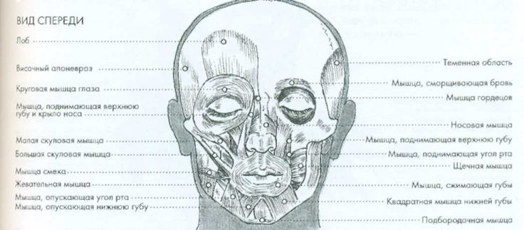 Файл:Анатомия html m5df80401.jpg