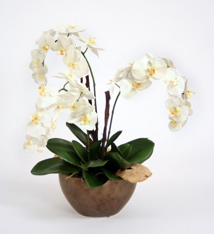 Cream-White Orchid Plant with Bark and Mushrooms in Bowl