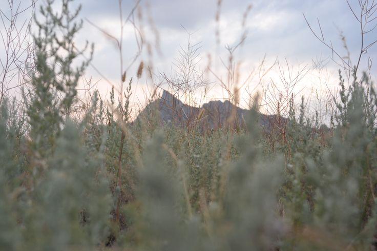 nature crimea mountains вечер вгорах лето