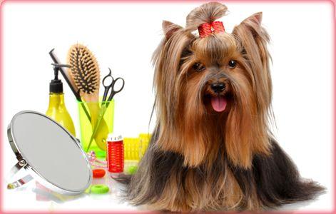 peluquería canina!!!