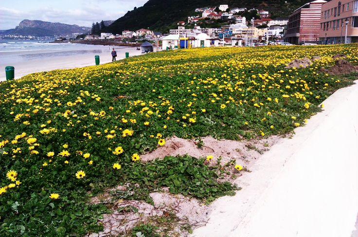 Spring at Muizenberg Beach 23rd Sept., 2013