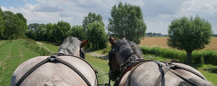 Trekpaarden camping en paardenmelkerij, Oostburg, Zeeland - Trekpaardenwereld