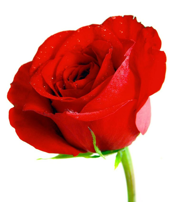 same day flower delivery on valentine day