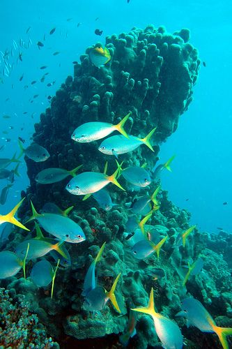 Great Barrier Reef off the coast of Queensland, Australia