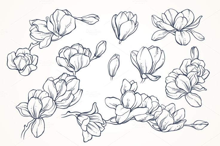 Linear vector magnolia flowers set by Color and Decor on @creativemarket